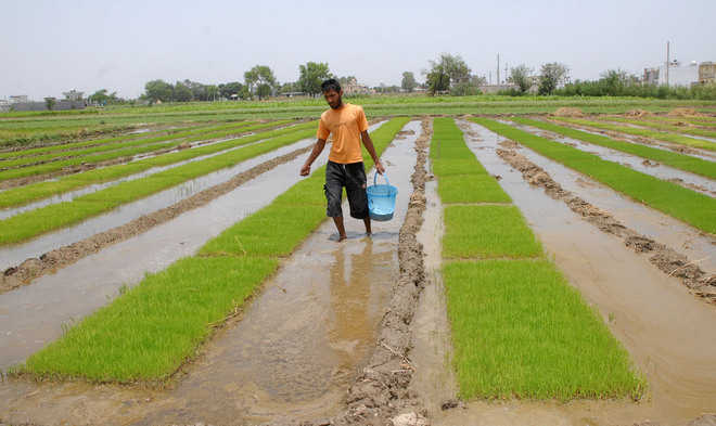No groundwork, late sowing 'diktat' goes unheard