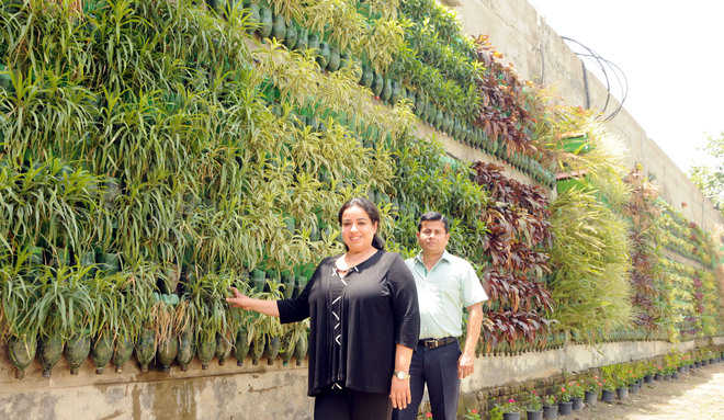 Mehra family's vertical garden cynosure of all eyes