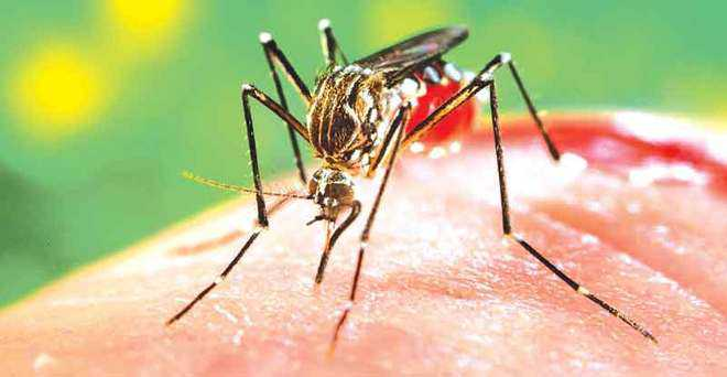 Dengue spreads tentacles in Bilaspur; 96 cases reported