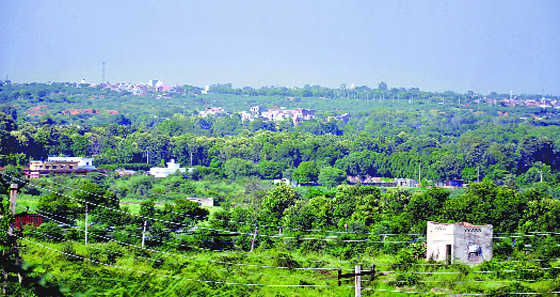 Even Manesar forest not spared