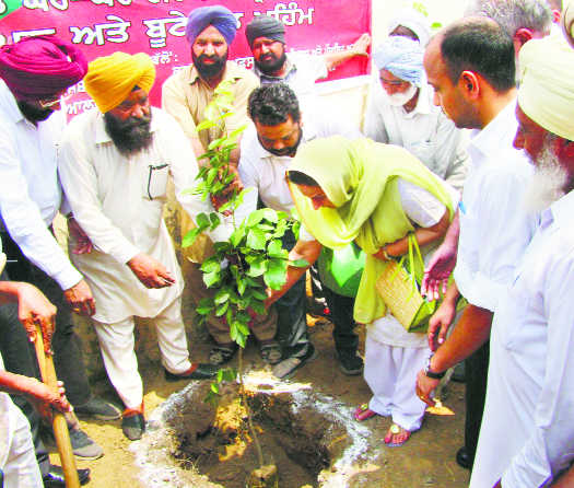District admn plants 1 lakh trees in a day