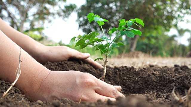 i-Hariyali app: Free saplings of your choice a touch away