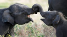 A Mammoth tale