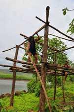 Harshvardhan builds a tree house