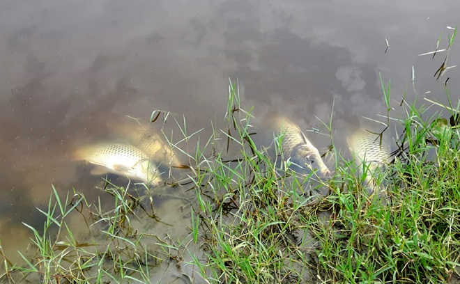 Thousands of fish found dead in Swan river