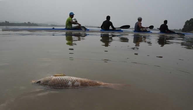 Fish found dead in Sukhna Lake