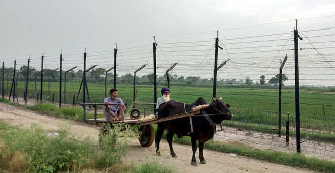 Faulty Fencing Ties Down Border Farmers