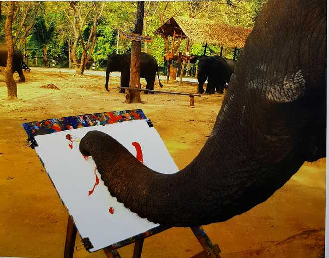Where elephants wield paintbrushes