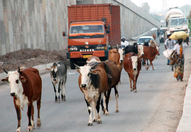 State cattle-free by Aug 15? Impossible
