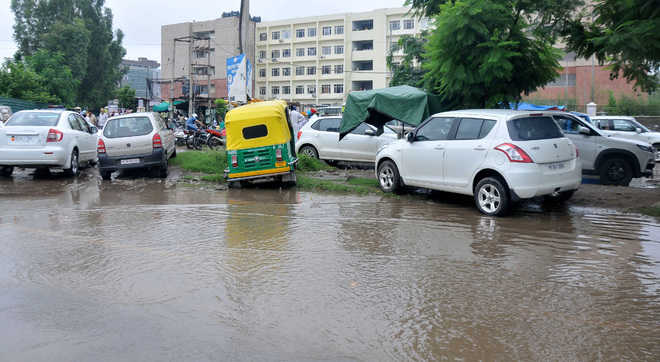9 trees uprooted in Chandigarh