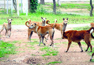 High Court orders fresh stray dog census