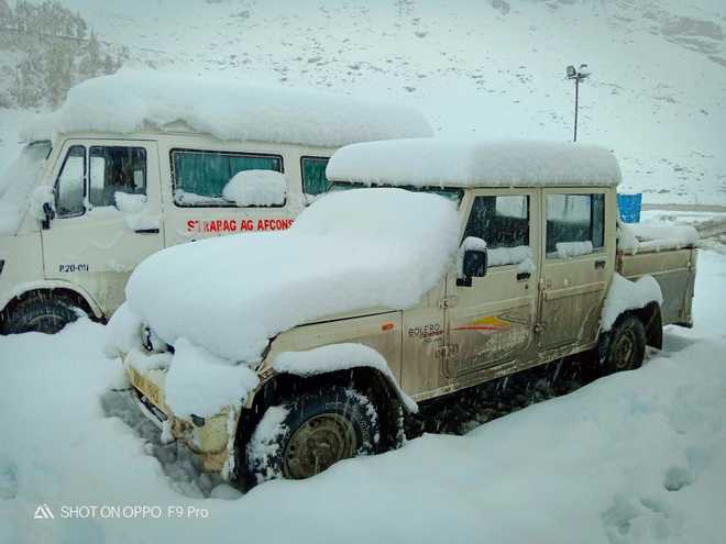 Apple, peas, potato crops ruined by snow In Himachal