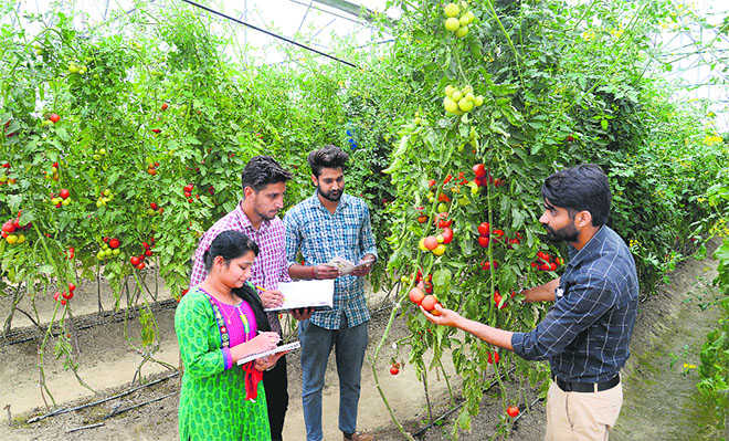 Towards talent farming