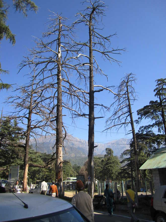 Palampur faces threat from rampant mining, deforestation