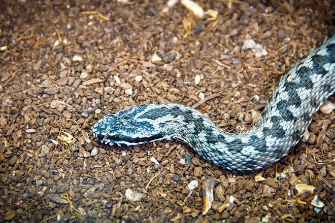 Why some snakes are deadlier than others decoded