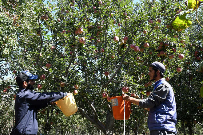Valley pesticide market unregulated, farmers hit