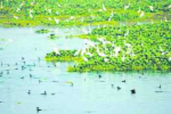 State has prepared action plan for wetlands, HC told