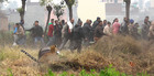 Bystanders run for cover as the leopard enters fields at Lamma Pind in Jalandhar on Thursday. Tribune photo: Malkiat Singh