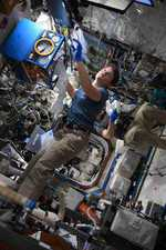 Mice flown to space may help decode ageing: NASA