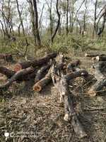 35 trees axed in Paonta Sahib