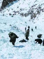 Five labourers killed in Khardung La avalanche