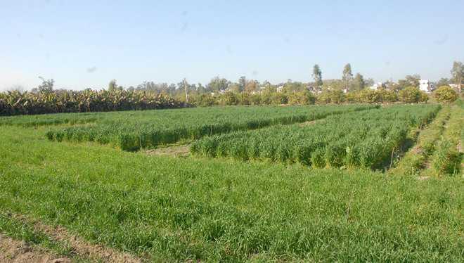 Farm varsity VC exhorts farmers to go for natural farming