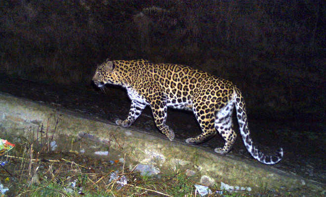 11-yr-old girl saves brother from leopard attack in Uttarakhand