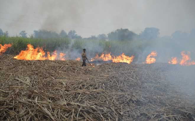 Govt staff to face music for burning straw