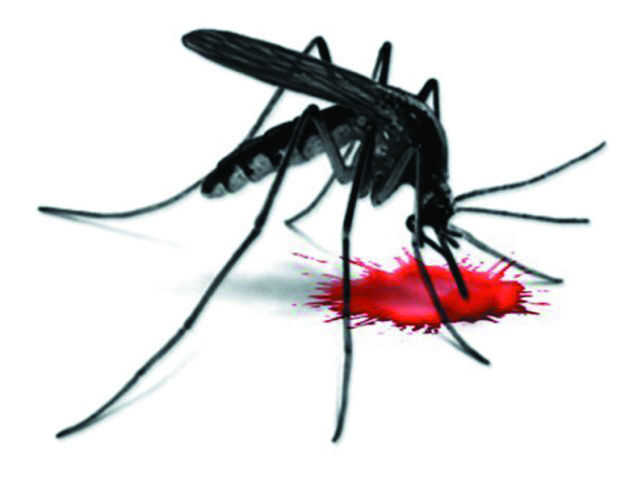 10 new dengue cases in four days, count reaches 60