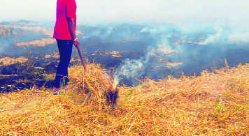 45% rise in stubble fires in Punjab this year