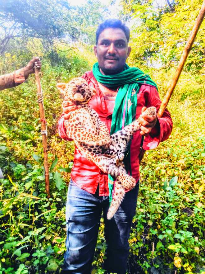 Hunt on for 4 men who tortured leopard cub in Gir forest, watch video