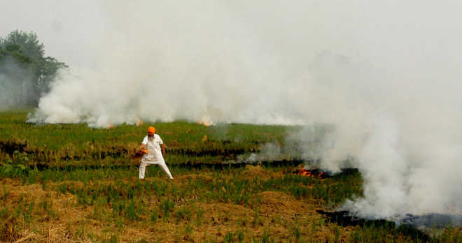 Stubble burning cases witness rise in district