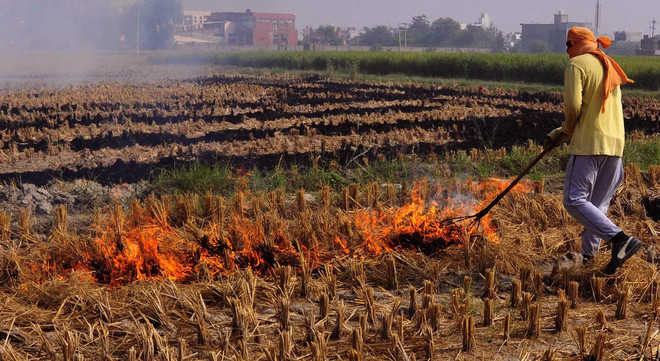 Farmers urged not to burn stubble