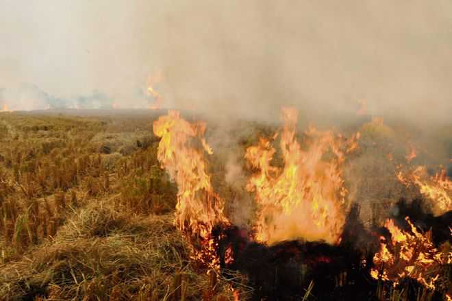 Straw burning continues unabated