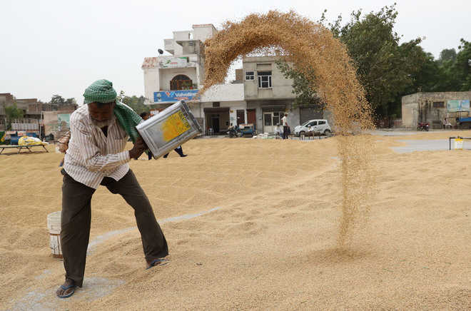 High temperature reduces paddy yield in Malwa region