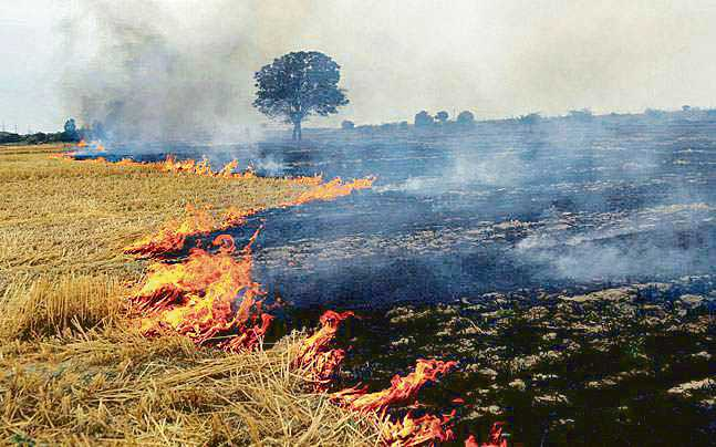 NSS volunteers roped in to raise awareness, check stubble-burning