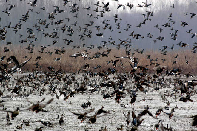 Wild Bird Day observed in Leh