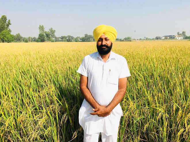 This farmer mixes straw into fields, reclaims his barren land
