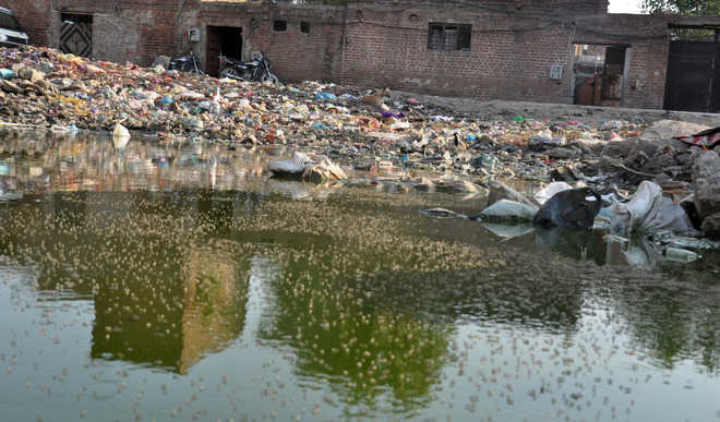 Stagnant water open invite to vector-borne diseases