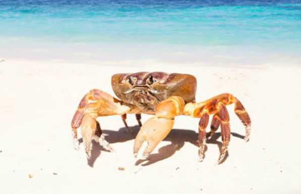Crabs can work through maze and remember route to find food