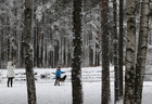 People walk a dog in a park in Saint Petersburg, Russia on October 29, 2019. — Reuters
