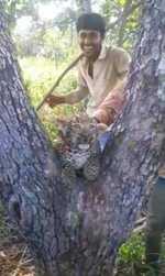 Cash reward for info on 4 men who tortured leopard cub in Gir forest, watch video