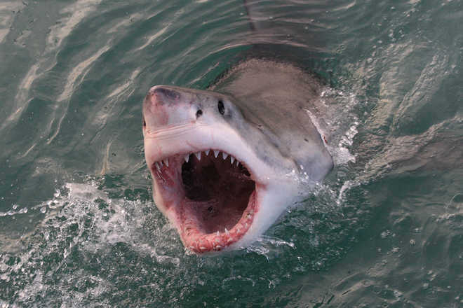British tourist ''eaten by shark'' while on holiday