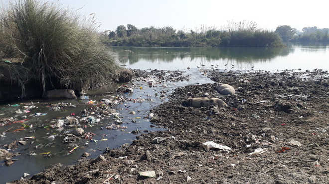 Pollution threat looms large over Western Jamuna Canal
