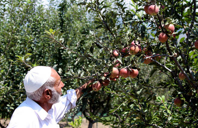 35 pc of apple orchards bear the brunt