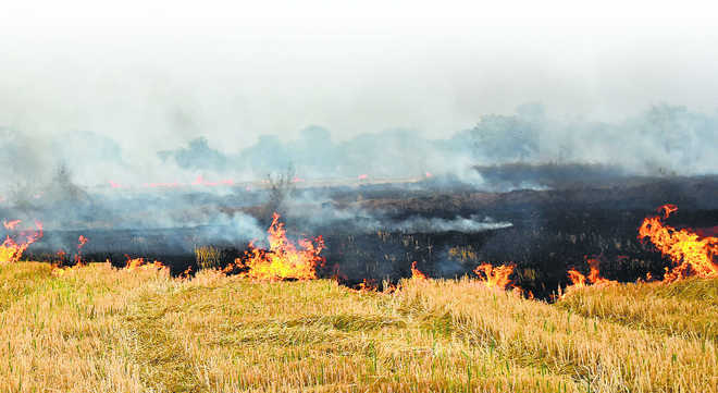 Earn, don't burn the paddy stubble