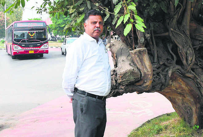 Admn finalises plan to remove 545 trees