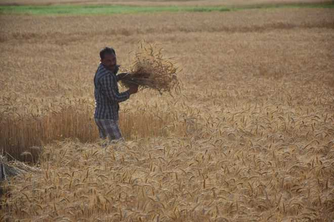 Haryana offers Rs 1K/ acre more to farmers
