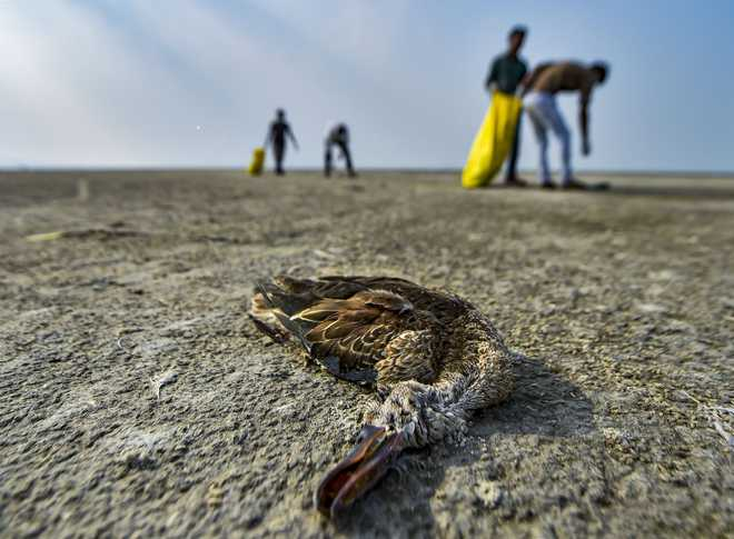 Thousands of migratory birds found dead in Rajasthan''s lake