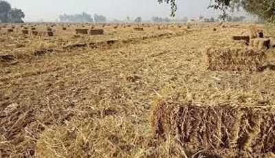 Rs 2,500/acre incentive for Pb farmers